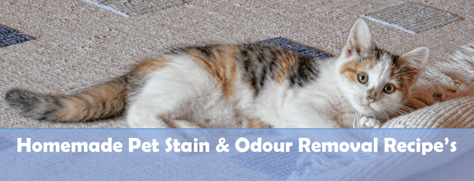 Homemade Pet Odour Removal Recipes By Edna