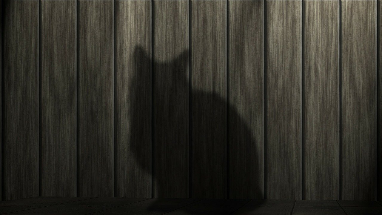 cat silouette - 8 ways animals are part of the family