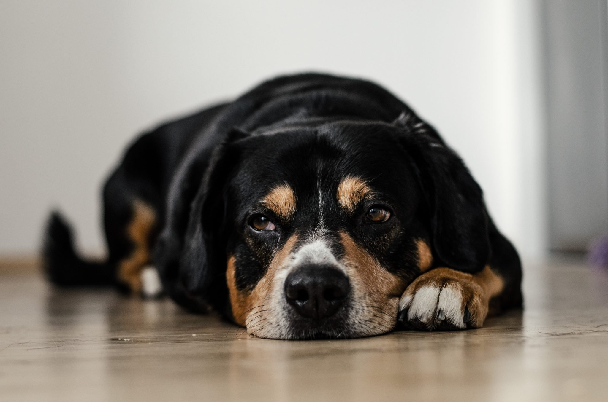 cute dog social shares